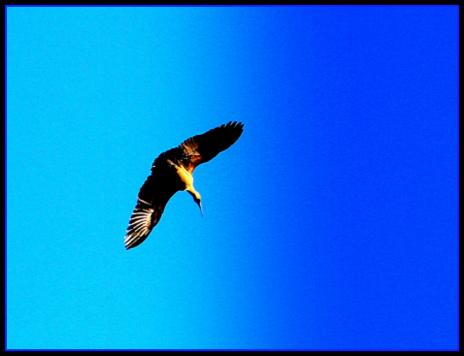 eagle - Copy.jpg